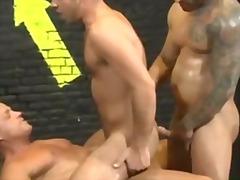 muscular, gaysex, muscle, homosexual, homo, pornstar, hunk, jock, gay